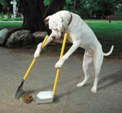 Eğitimli Köpek Sahibi Olmak Ayrıcalıktır.